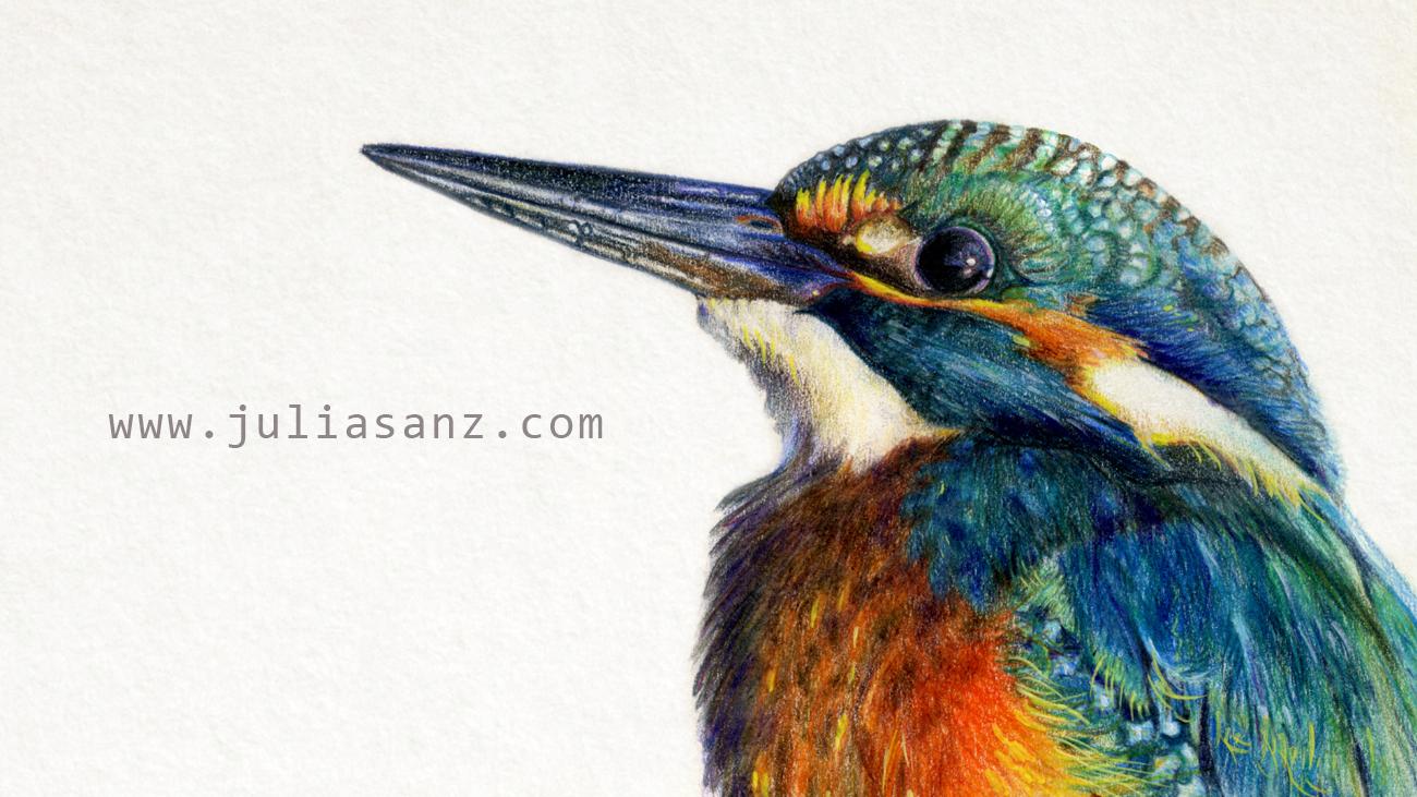 kingfisher_header_juliasanz